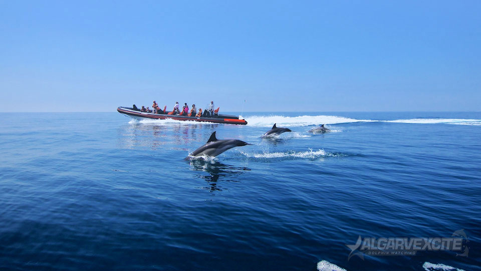 dolphin watching caves tour algarve