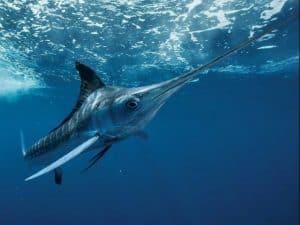 AEA swordfish