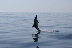 Calm Algarve Seas to See Wild Dolphins
